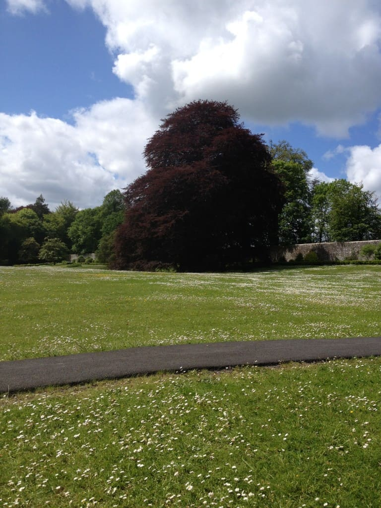 Signature Tree in Coole Park, Co. Galway